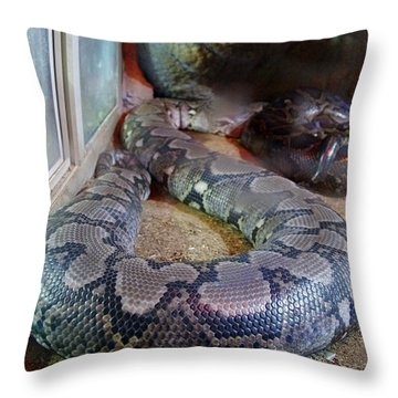 Out Of Africa  Black Snake Throw Pillow