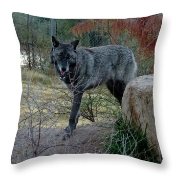 Out Of Africa Black Wolf Throw Pillow
