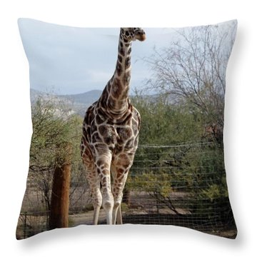 Out Of Africa  Giraffe 1 Throw Pillow