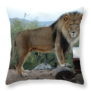 Out Of Africa  Lion 1 Throw Pillow
