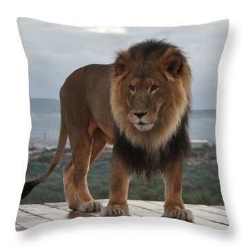 Out Of Africa Lion 3 Throw Pillow