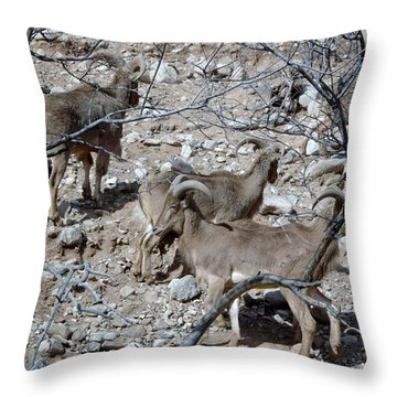 Out Of Africa  Mountain Goats Throw Pillow
