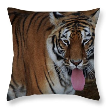 Out Of Africa  Tiger 2 Throw Pillow