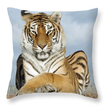 Out Of Africa Tiger 3 Throw Pillow
