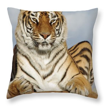 Out Of Africa Tiger 4 Throw Pillow