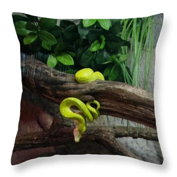 Out Of Africa Tree Snake Throw Pillow