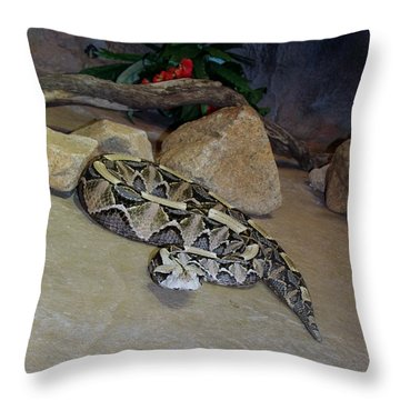 Out Of Africa Viper 2 Throw Pillow