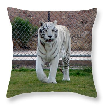 Out Of Africa White Tiger Throw Pillow