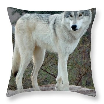 Out Of Africa Wolf  Throw Pillow