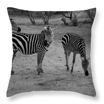 Out Of Africa  Zebras Throw Pillow