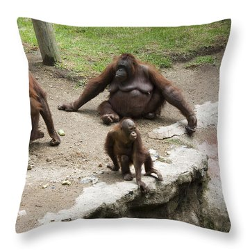 Throw Pillow featuring the photograph Out Of Reach by Lynn Palmer