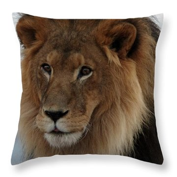 Out Ofafrica  Lion 4 Throw Pillow
