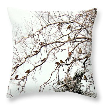 Throw Pillow featuring the photograph Out On A Limb First Snow by Barbara Chichester
