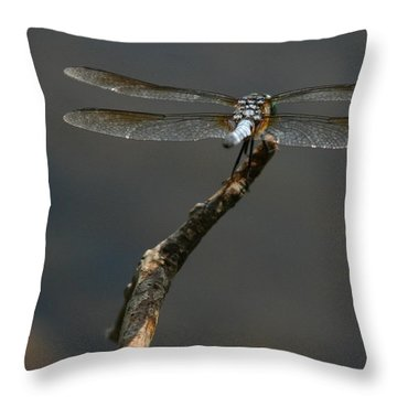 Out On A Limb Throw Pillow by Karol Livote