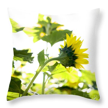 Overexposed Sunflower Throw Pillow by Bernard Jaubert