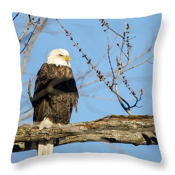 Overlooking Freedom Throw Pillow