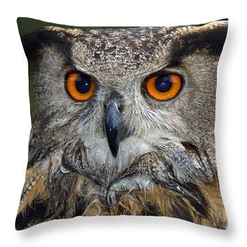 Owl Bubo Bubo Portrait Throw Pillow by Matthias Hauser