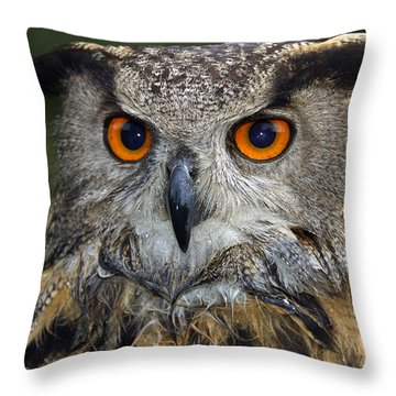 Owl Bubo Bubo Portrait Throw Pillow