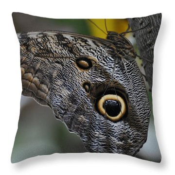 Throw Pillow featuring the photograph Owl Butterfly by Bianca Nadeau