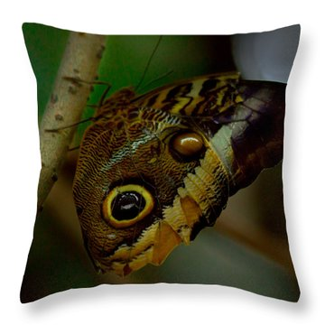 Owl Butterfly On Tree Throw Pillow by Eti Reid