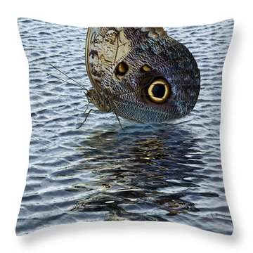 Throw Pillow featuring the photograph Owl Butterfly On Water by Jane McIlroy