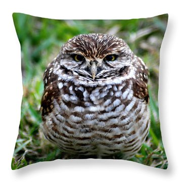 Owl. Best Photo Throw Pillow