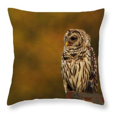 Owl On A Fence Throw Pillow
