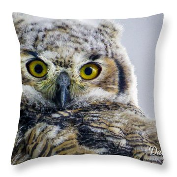 Owlet Close-up Throw Pillow
