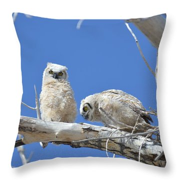 Owlets In White Throw Pillow