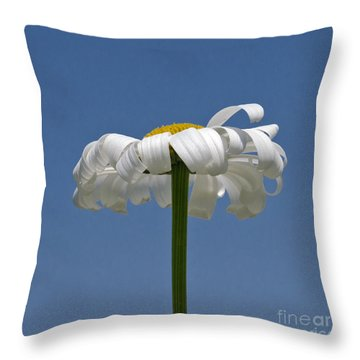 Oxeye Daisy Throw Pillow