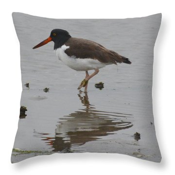 Oystercatcher At Low Tide Throw Pillow by Dan Williams