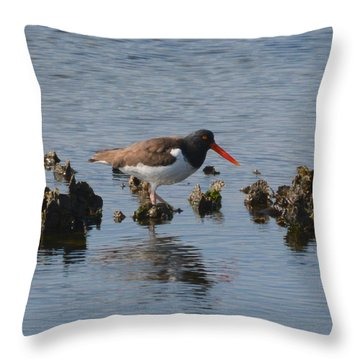 Oystercatcher Throw Pillow by Dan Williams