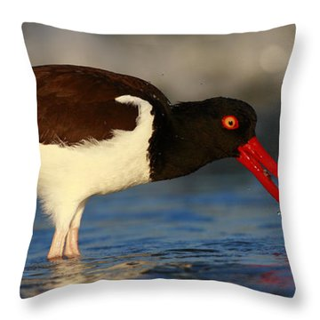 Oystercatcher In Surf Throw Pillow