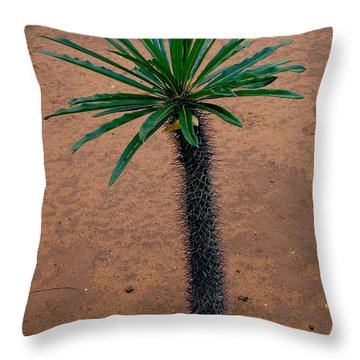 Pachypodium Sapling Throw Pillow