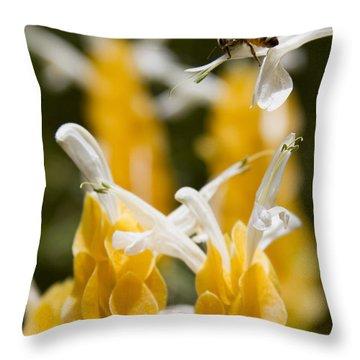 Pachystachys Lutea - Lollipop Plant - Golden Candle - Shrimp Plant Throw Pillow by Sharon Mau