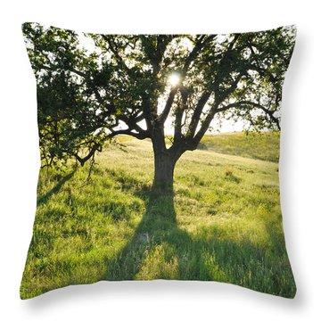 Throw Pillow featuring the photograph Pacific Coast Oak Malibu Creek by Kyle Hanson