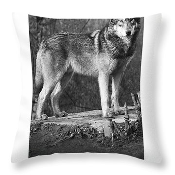 Pack Sentinel Naturally Defensive Poster Throw Pillow