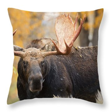 Paddles Throw Pillow by Aaron Whittemore