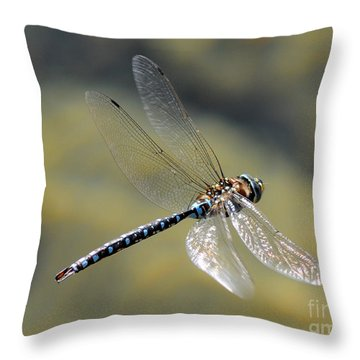 Paddletail Darner In Flight Throw Pillow by Vivian Christopher