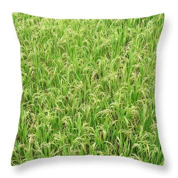 Paddy Field Throw Pillow by Yew Kwang