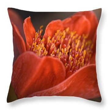 Paintbrush Lily Throw Pillow by Joy Watson