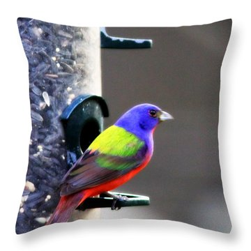 Painted Bunting - Img 9757-002 Throw Pillow