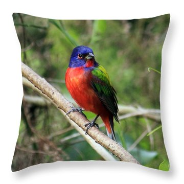 Throw Pillow featuring the photograph Painted Bunting Photo by Meg Rousher