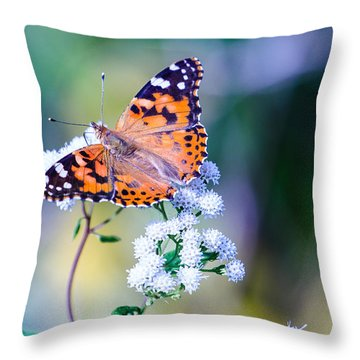 Painted Lady Butterfly 1 Throw Pillow