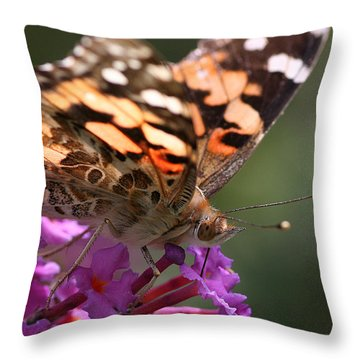 Painted Lady On Butterfly Bush Throw Pillow