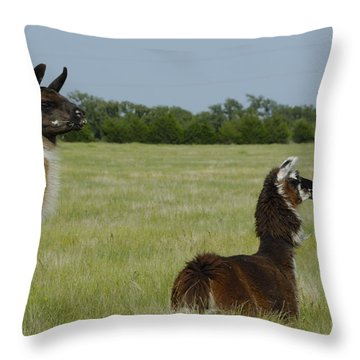 Pair Of Alpacas Throw Pillow by Charles Beeler