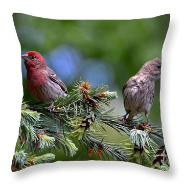 Pair Of Purple Finches Throw Pillow