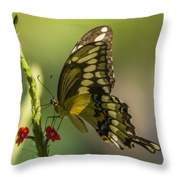 Throw Pillow featuring the photograph Palamedes Swallowtail by Jane Luxton