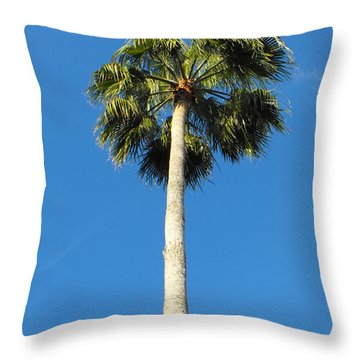 Palm In Florida Throw Pillow by Erick Schmidt