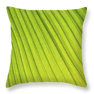Palm Tree Leaf Abstract Throw Pillow by Elena Elisseeva
